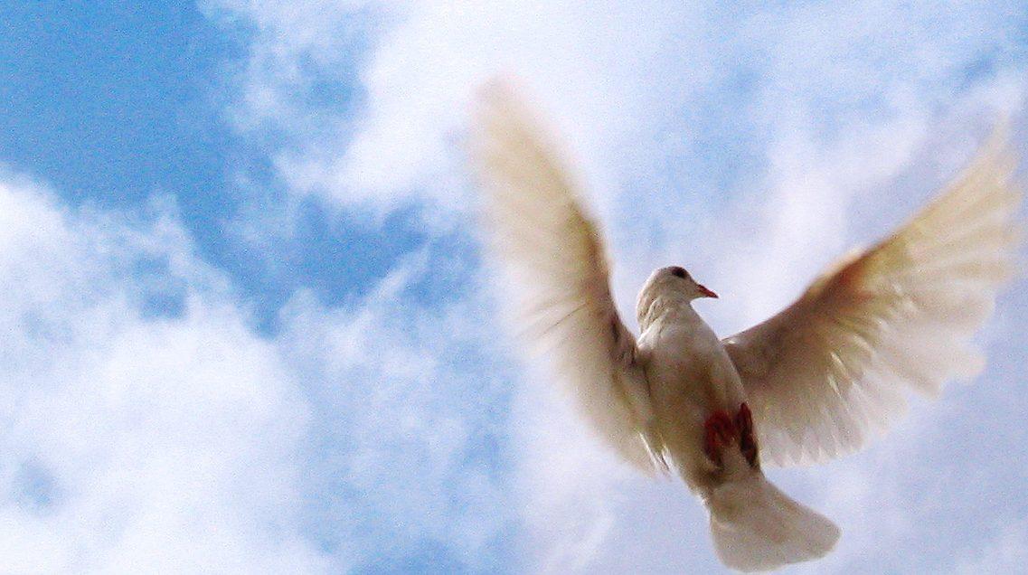767682 28509903 e1513870459652 - Duchovní dary, charismatické dary, Dary Ducha svatého