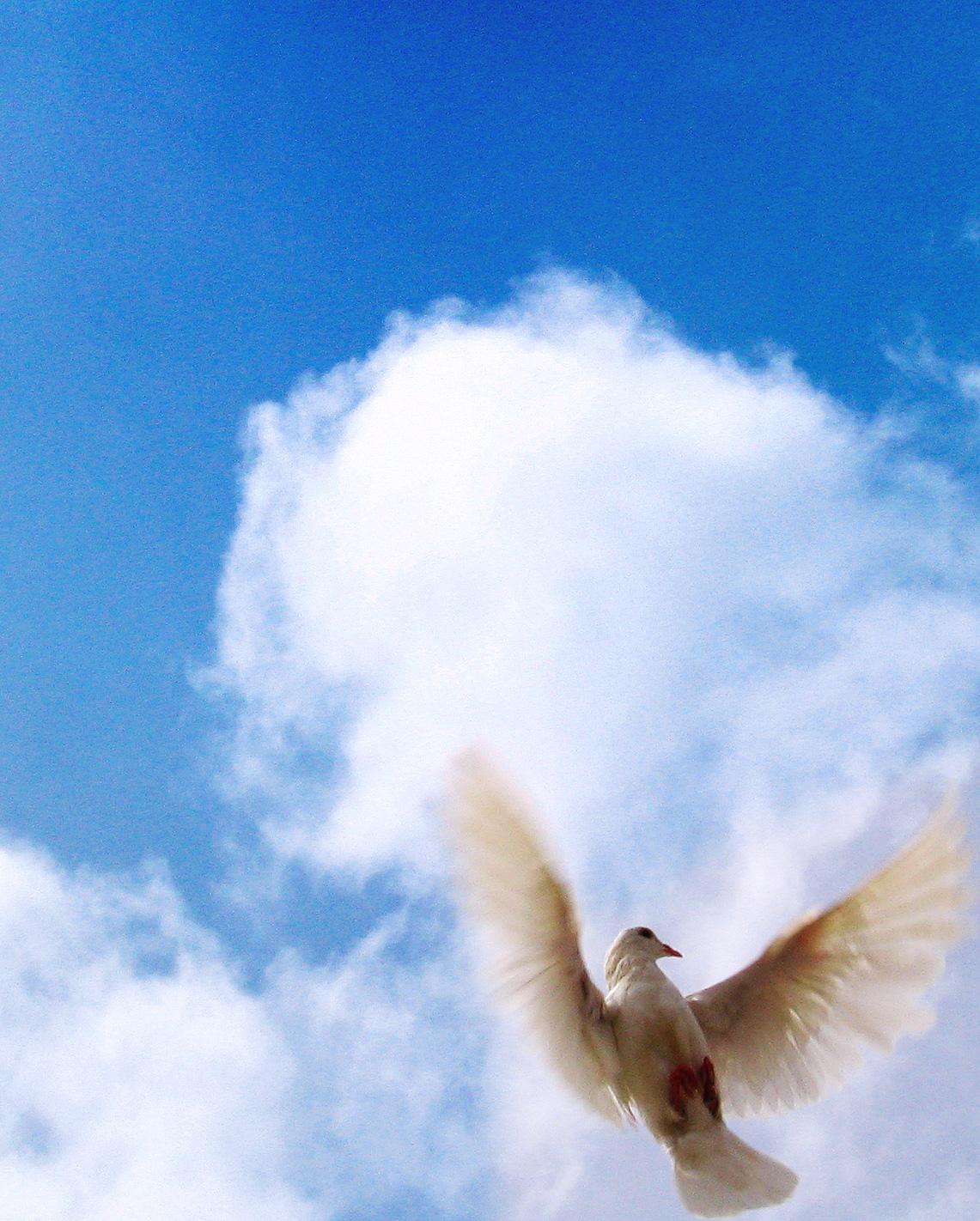 Duchovní dary, charismatické dary, Dary Ducha svatého
