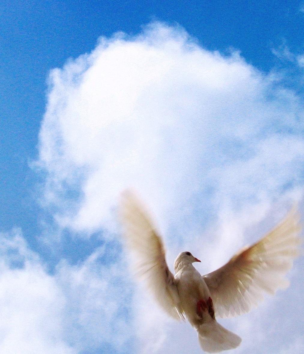 767682 28509903 e1396650923798 - Duch Svatý, kdo je Duch Svatý, vysvětlení pojmu