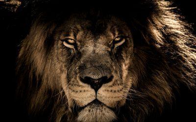 african lion 2888519 1920 400x250 - Odkryté Lži