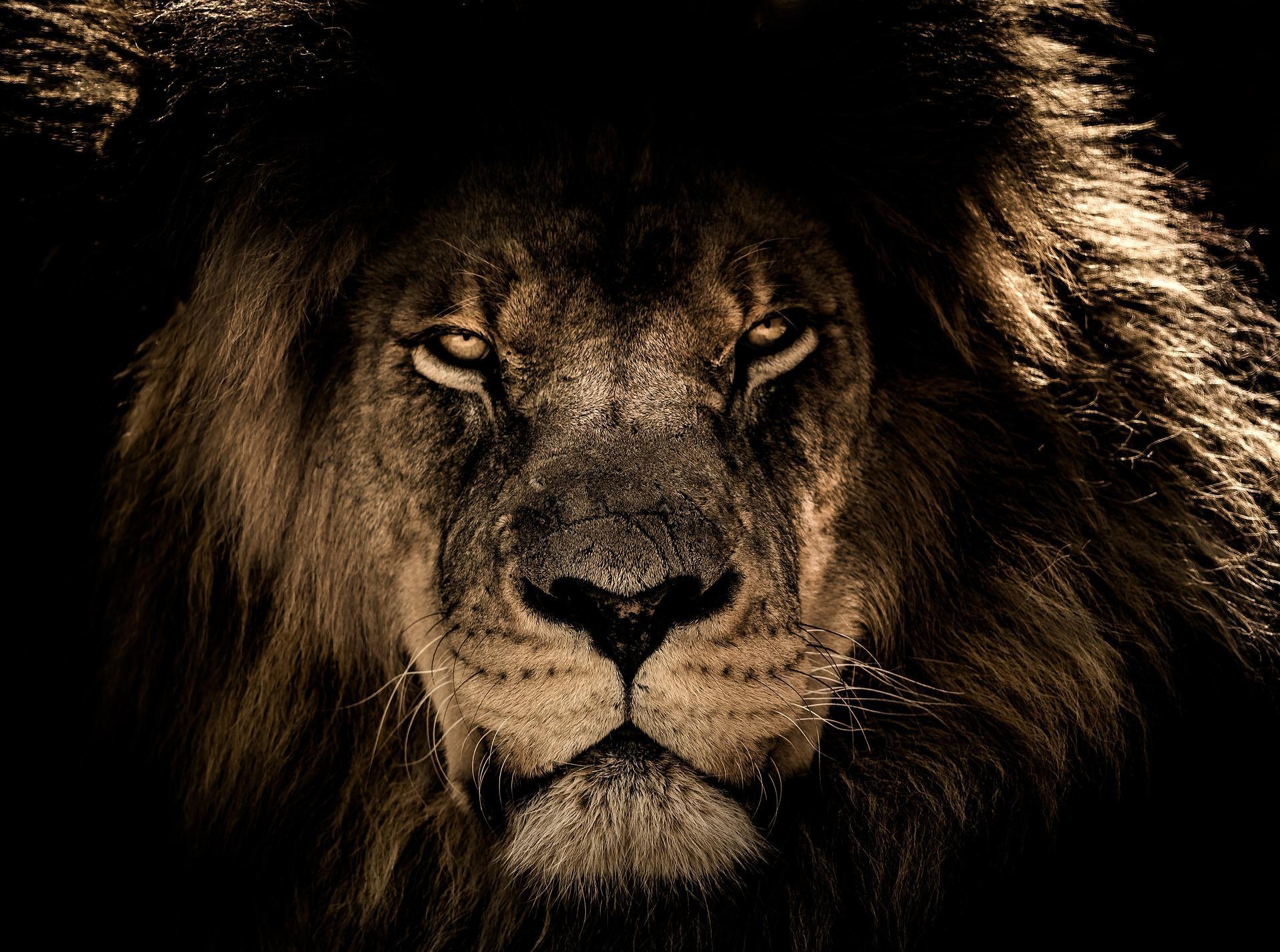 african lion 2888519 1920 - Polopravdu Kreacionismu použije Satan pro sebe