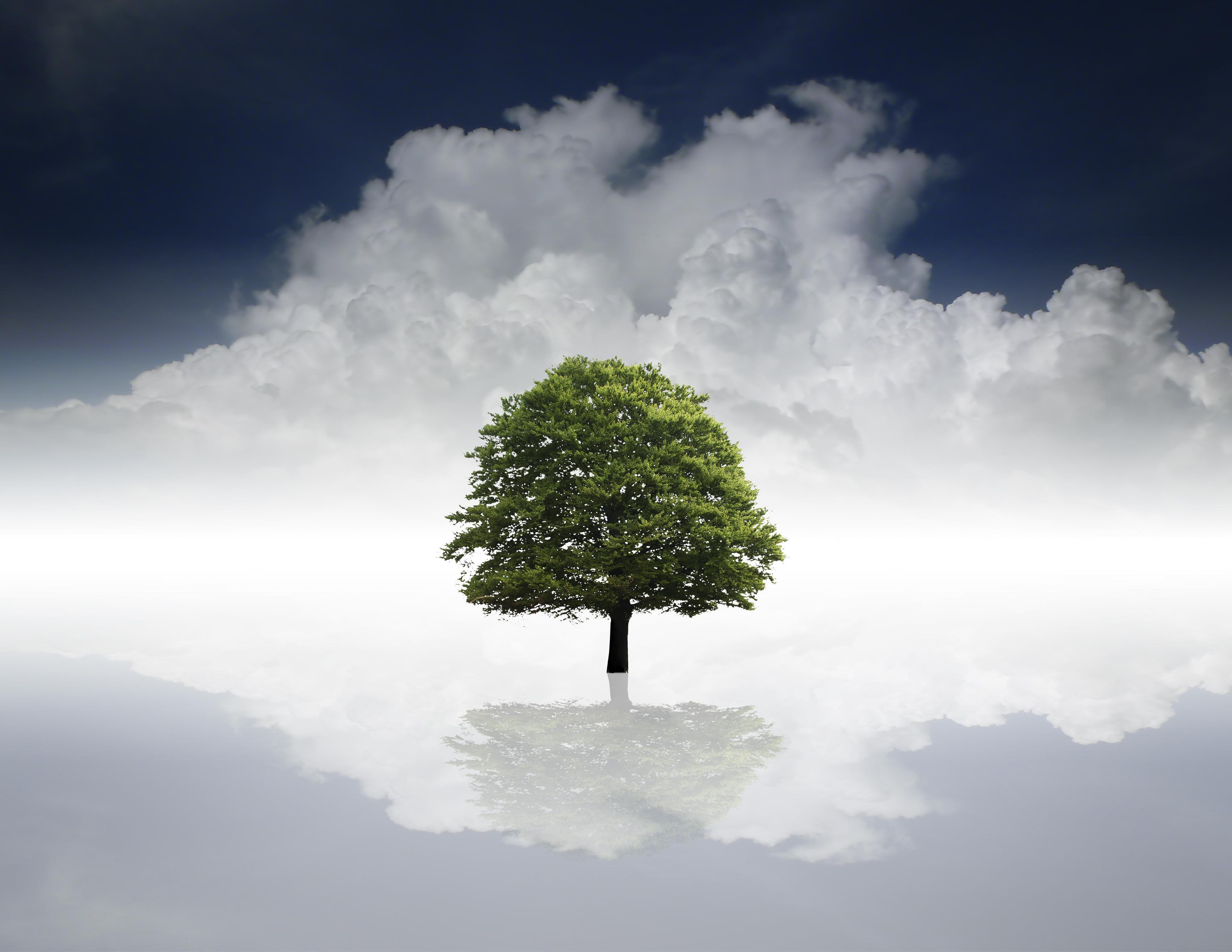 1442171 56320918 - Strom života a strom poznání